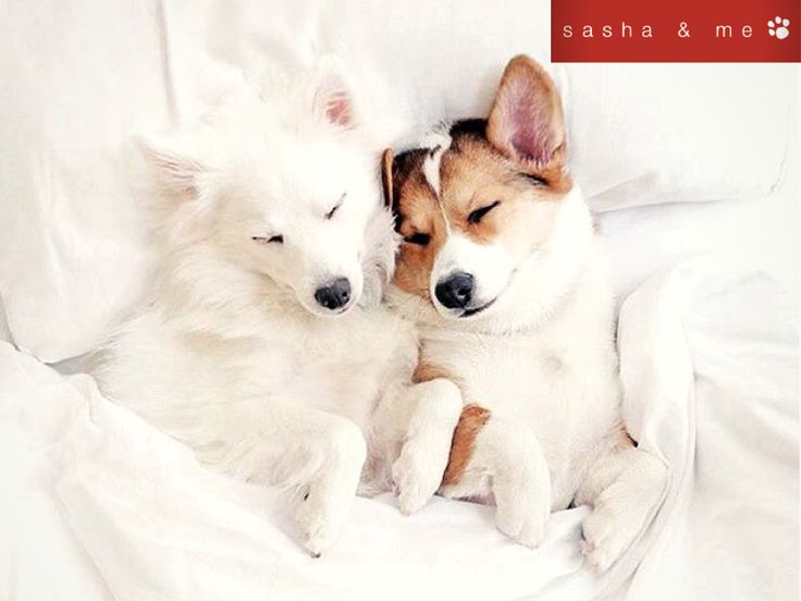I think dogs are the most amazing creatures, they give unconditional love for me they are the role model for being alive.#luxury dog beds australia, #designer dog beds, #luxury dog beds, #designer dog beds australia, #stylish dog beds, #designer dog accessories australia, #luxury pet beds, #designer dog bed, #best dog beds, #designer dog accessories, #boutique dog beds, #luxury dog bed, #trendy dog beds, #organic dog bed, #luxury dog beds online, #dog beds australia, #large luxury dog…