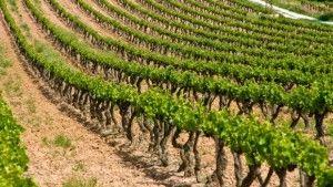 Les Coteaux Varois en Provence AOC