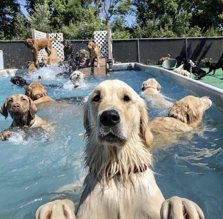 ¿Quién está preparado para una fiesta en la piscina? ☀️🌊 #perros #perro #animales #animales #animales #puppies #naturaleza #pet #perros cachorros   – Dogs