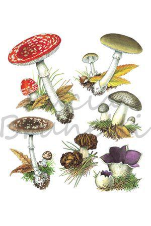19 fantastiche immagini su illustrazioni di piante su for Mapo frutto
