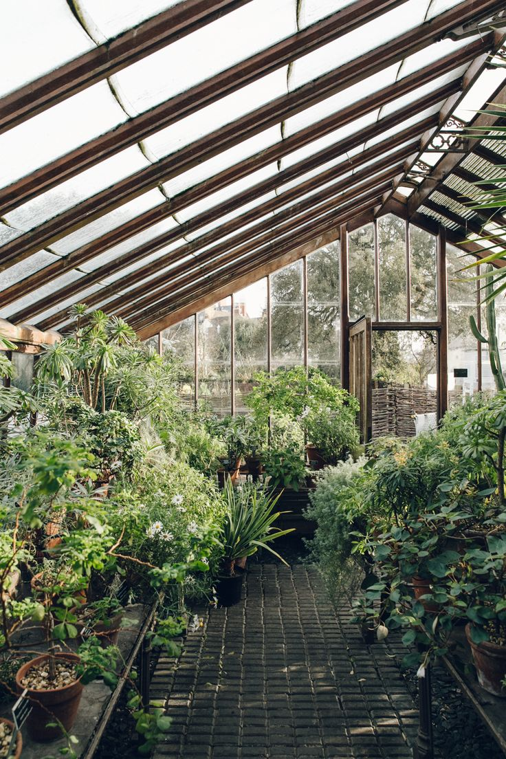 Chelsea Physic Garden - more images: http://www.haarkon.co.uk/explore-blog/england-london-chelsea-physic-garden?rq=chelsea