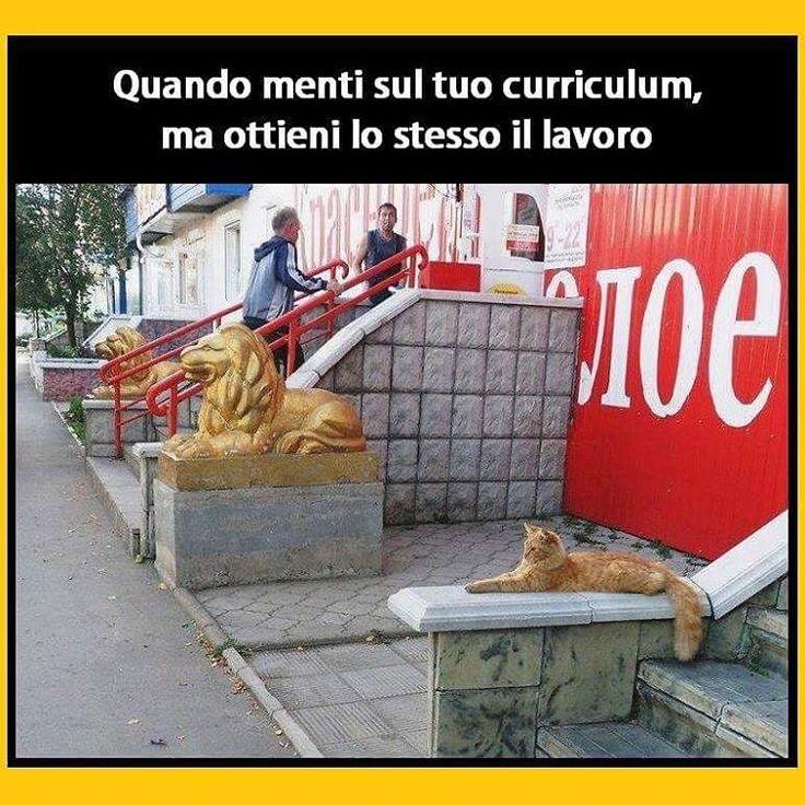 I have no idea what I'm doing.  #tmlplanet #lavoro #gatto #gatti #statua #animali #muro