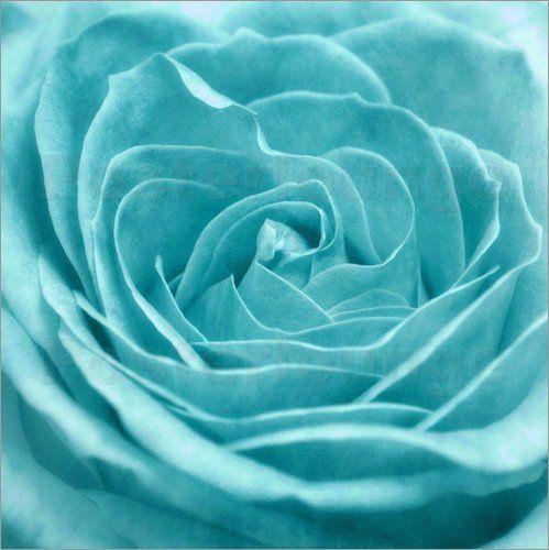 turquoise rose turquoise pinterest rosen und t rkis. Black Bedroom Furniture Sets. Home Design Ideas