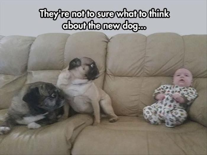 55 Funny Pictures for Today