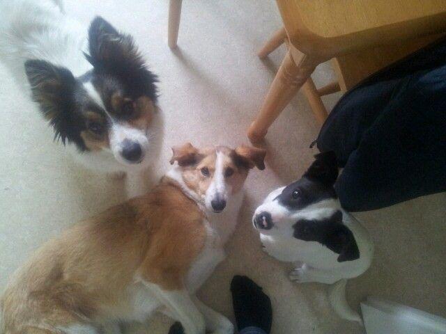 Mitch, Ginger, Badger