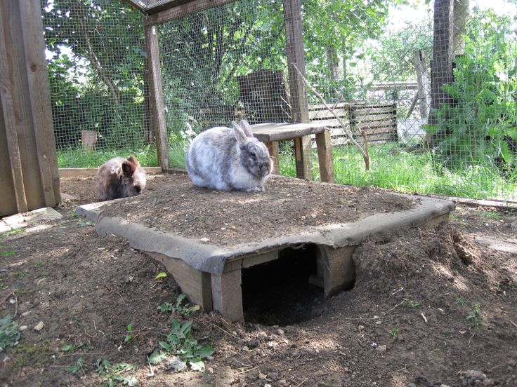 Underground hide-away for rabbits. Could make the top open for safety/easy access to clean