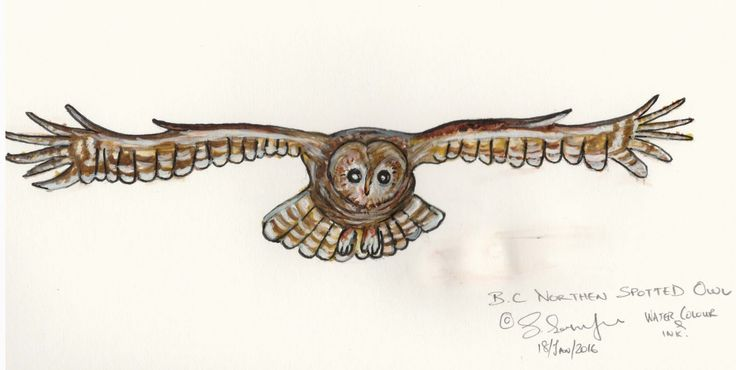 You'll never hear an #owl - Watercolour pencil, pen and ink