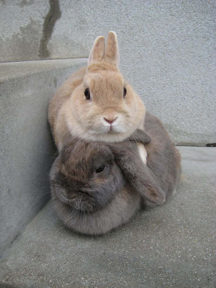 Why do they sit on top of each other like this?