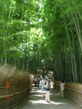 Kyoto, Japan  Tenryu-Ji Shrine's Bamboo trail  A beautiful bamboo trail tucked in this famous Japanese Shrine