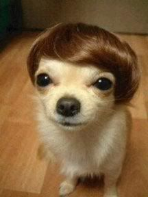 hahahaha really??: Donald O'Connor, Justin Bieber, Pet Dogs, Funny Dogs, Donald Trump, Hair Pieces, So Funny, Hair Looks, Little Dogs