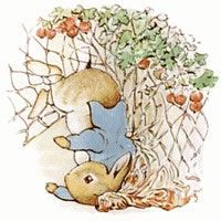Tangled in Mr. McGregor's garden - hurry Peter...so you don't end up in a pie like your father!
