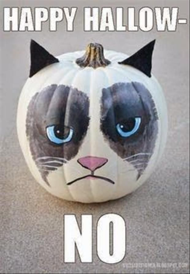 Funniest Meme Characters : Images about grumpy cat ^ tard on pinterest