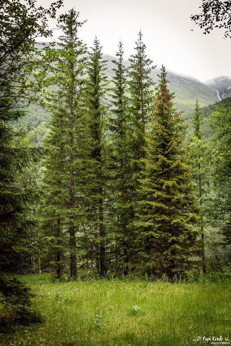 Norwegian nature! © Popi Kmb