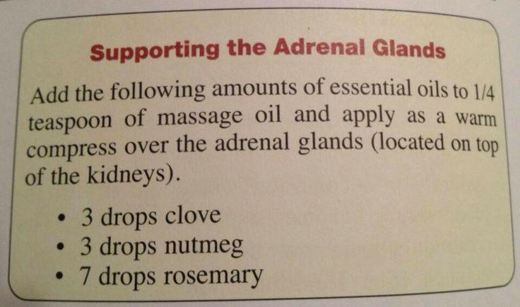 Young Living Essential Oils: Adrenal Glands Fatigue  http://www.us.ylscents.com/cindyland