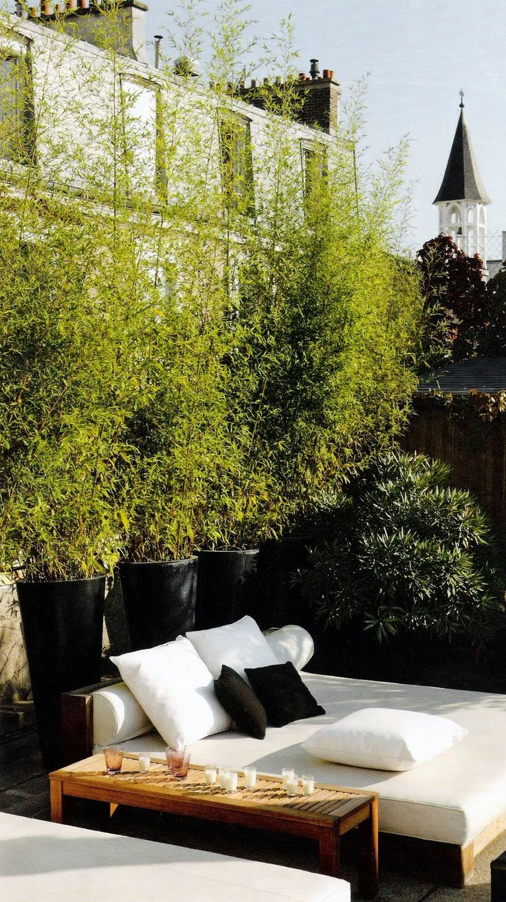 A rooftop lounge in the middle of Paris,bamboo in pots for a privacy screen