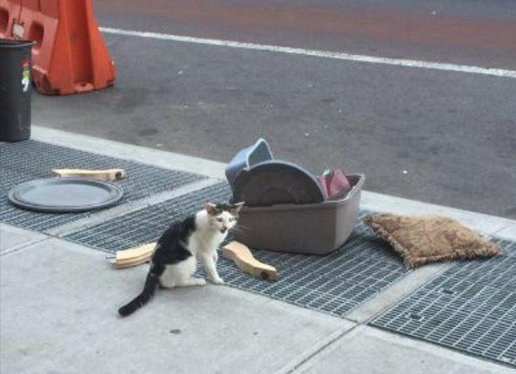 Foto de gato largado na rua com suas coisinhas mostra a dor do abandono
