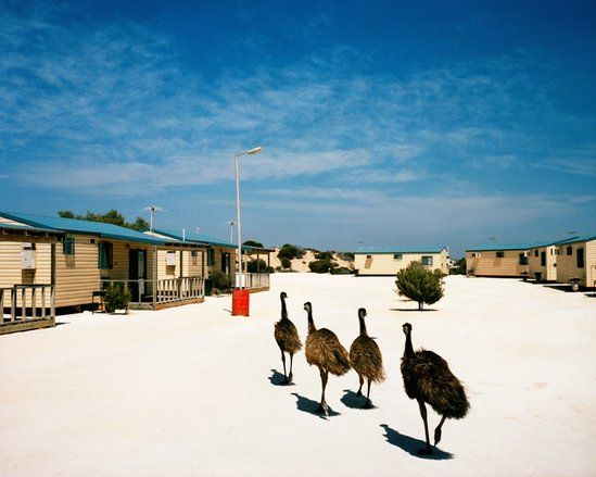 Shark Bay, WA from the series 'Welcome to Nowhere' :: Museum of Contemporary Art Australia Trent Parke