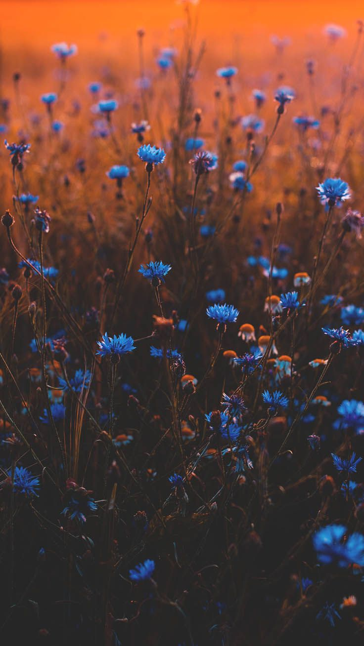 20 papéis de parede para celular com flores lindas
