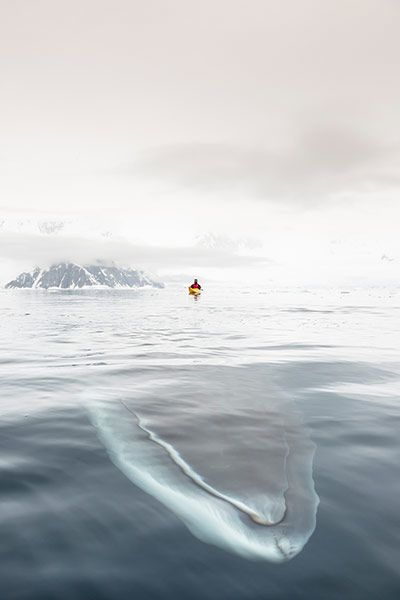 A Minke whale!!! Credit: Andrew Peacock/Barcroft USA A minke whale swims up to inspect the kayaks