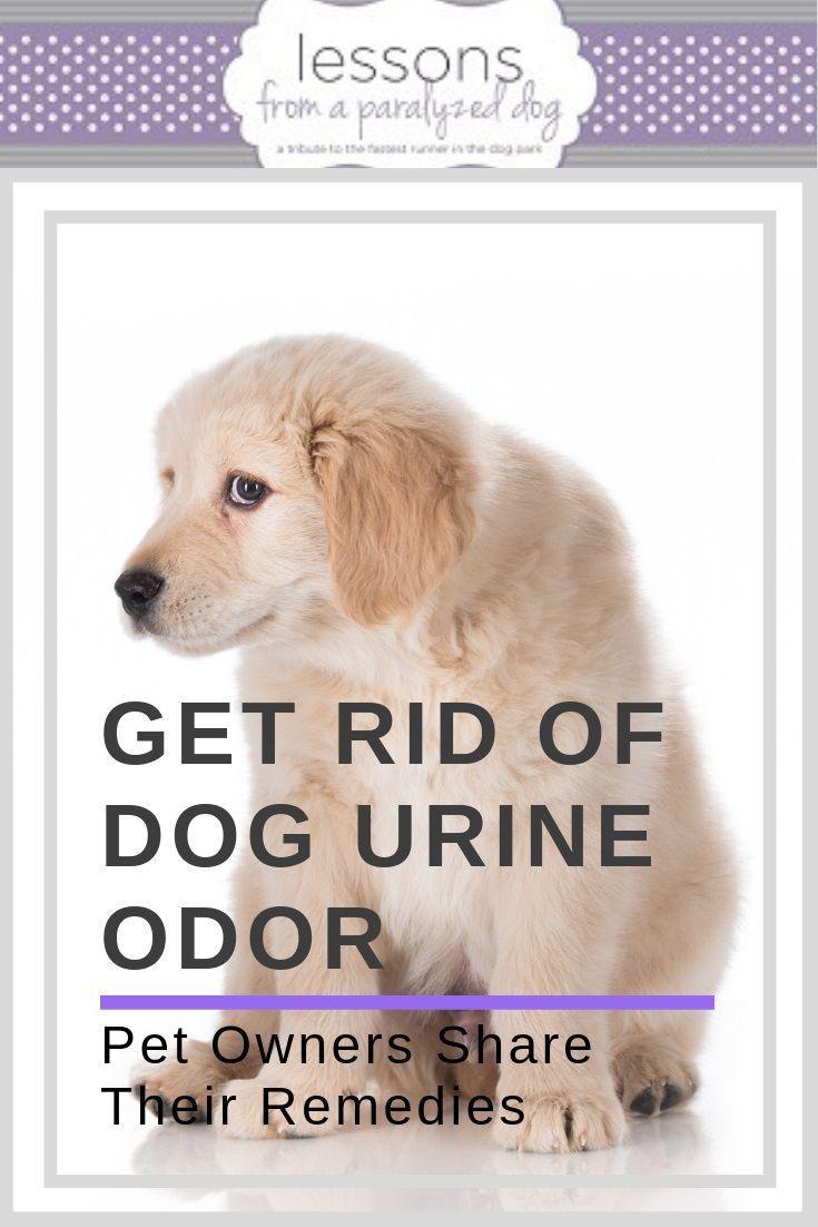 Urine Odors