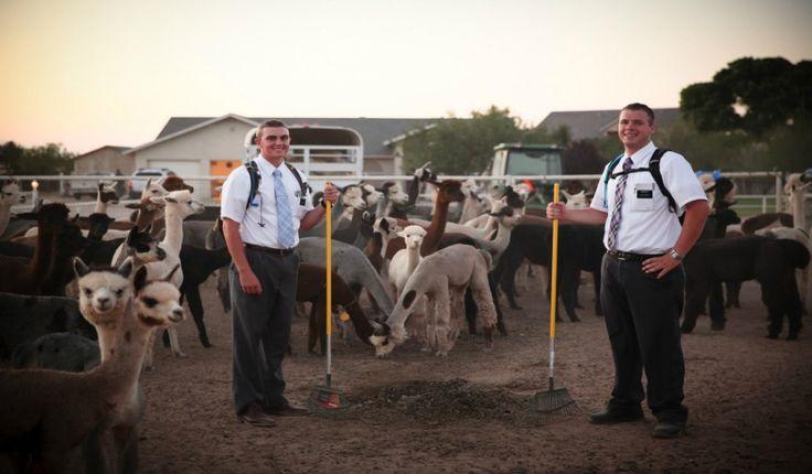 O que todo missionário mórmon deve aprender sobre liderança? Leia em: http://mormonsud.net/a-igreja-de-jesus-cristo/verdadeira-lideranca-mormon/