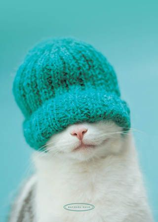 Oh Mama : )……MUCH TO MY DISMAY AND DISCOMFORT,--SHE'S ON A KNITTING KICK AGAIN……WHOA BOY!!!………..ccp