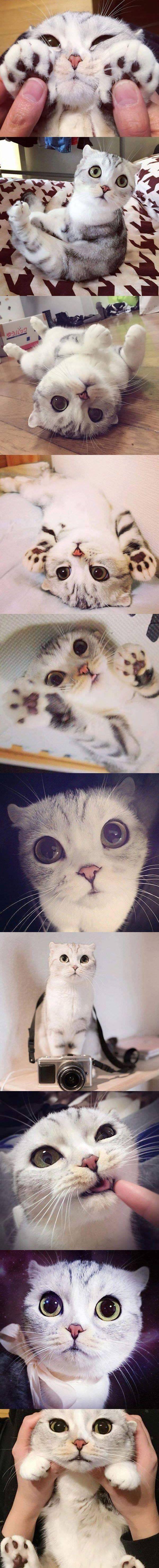 Gatito adorable ...