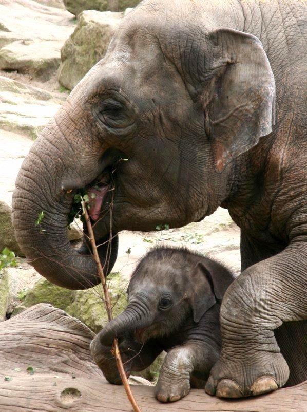 290 Best Elephants Images On Pinterest  Baby Elephants -5204