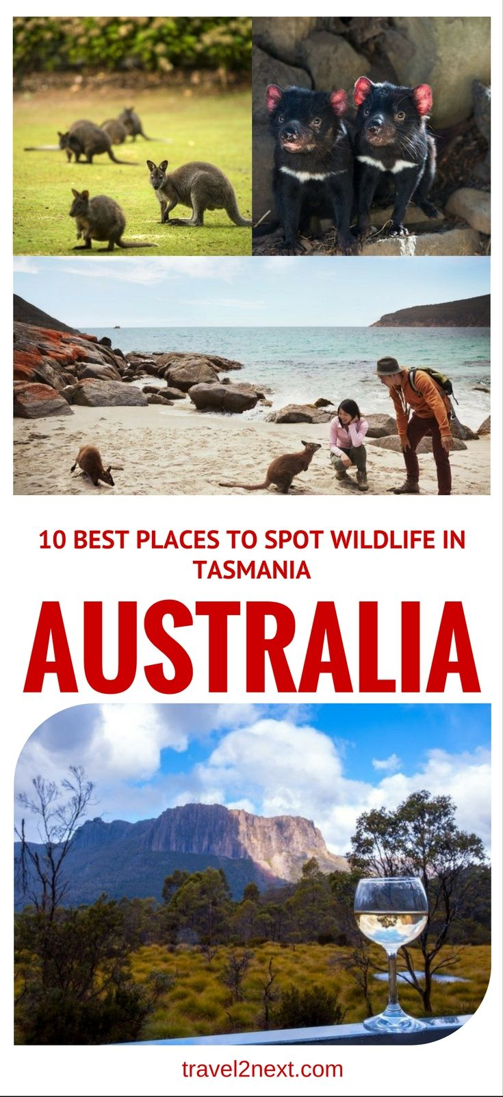 10 best places to spot wildlife in Tasmania. Did you know Tasmania has 33 native terrestrial mammals and 41 marine mammals?