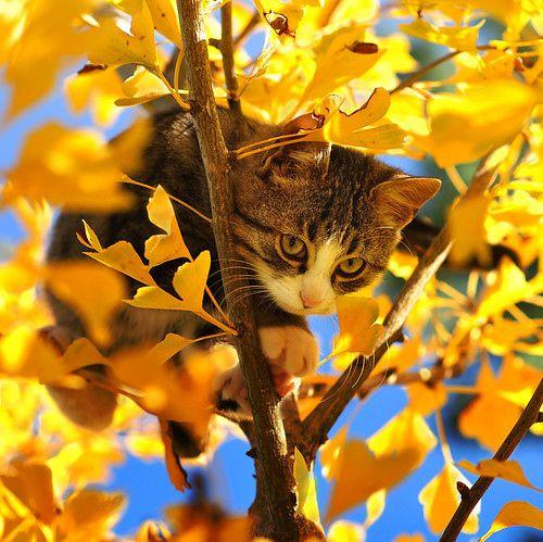 cat lynx autumn foliage - photo #26