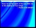 Psalm 17:8  New International Version (©2011)  Keep me as the apple of your eye; hide me in the shadow of your wings.
