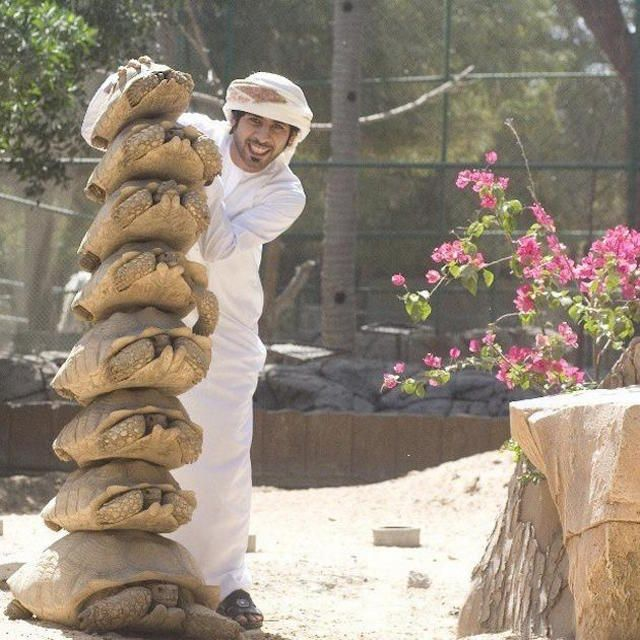 A Guy Stacking Tortoises  30 Crazy & Hilarious Things That You'll Only See In Dubai • Page 5 of 6 • BoredBug