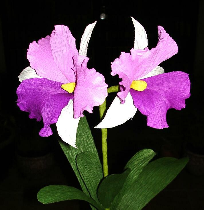 Crepe paper orchid cattalia