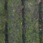 Groene aanslag van tegels verwijderen