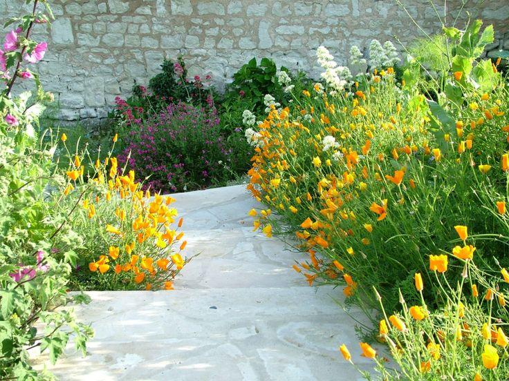 Comment appelez-vous ces fleurs ? Escholschia n'est-ce-pas ! What the name of such flowers? Escholschia, isn't it!