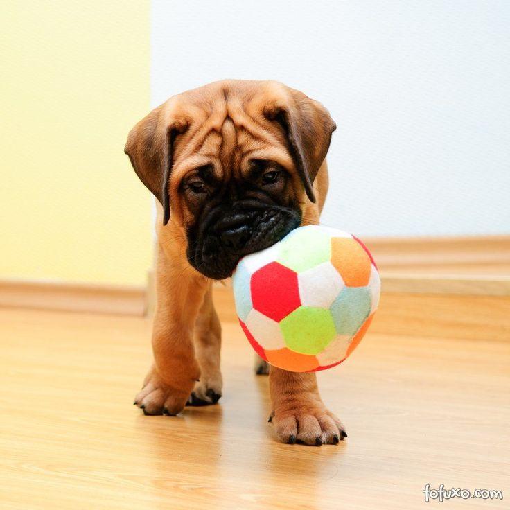 Como divertir seu cão dentro de casa - Adestramento