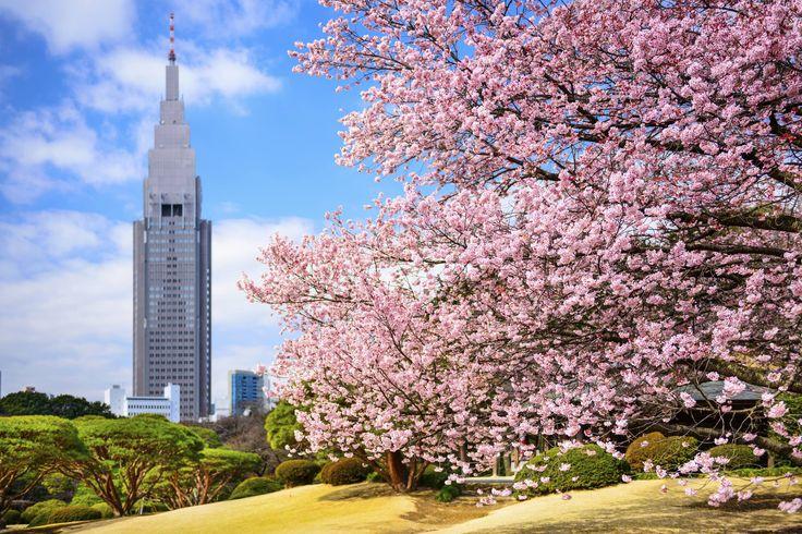 Shinjuku's not-so secret garden is still a stunner.