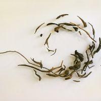 """Spiral""- Driftwood – Swedish Hospital, Edmonds Meditation Room, Edmonds WA"