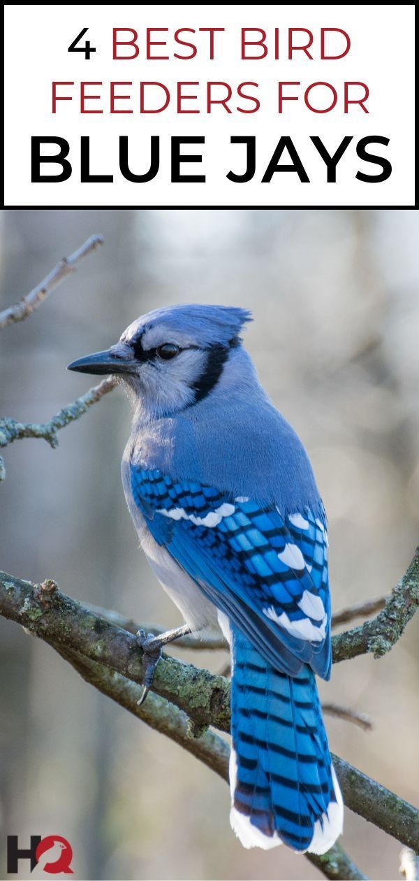 The 4 Blue Jay Feeders Working Best For Me 2020 Blue Jay Blue