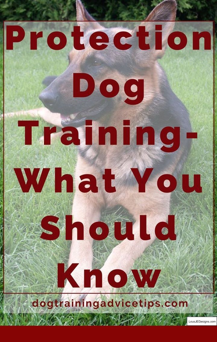 How To Train A Dog To Stay In Yard And Pics Of Best Way To Train A