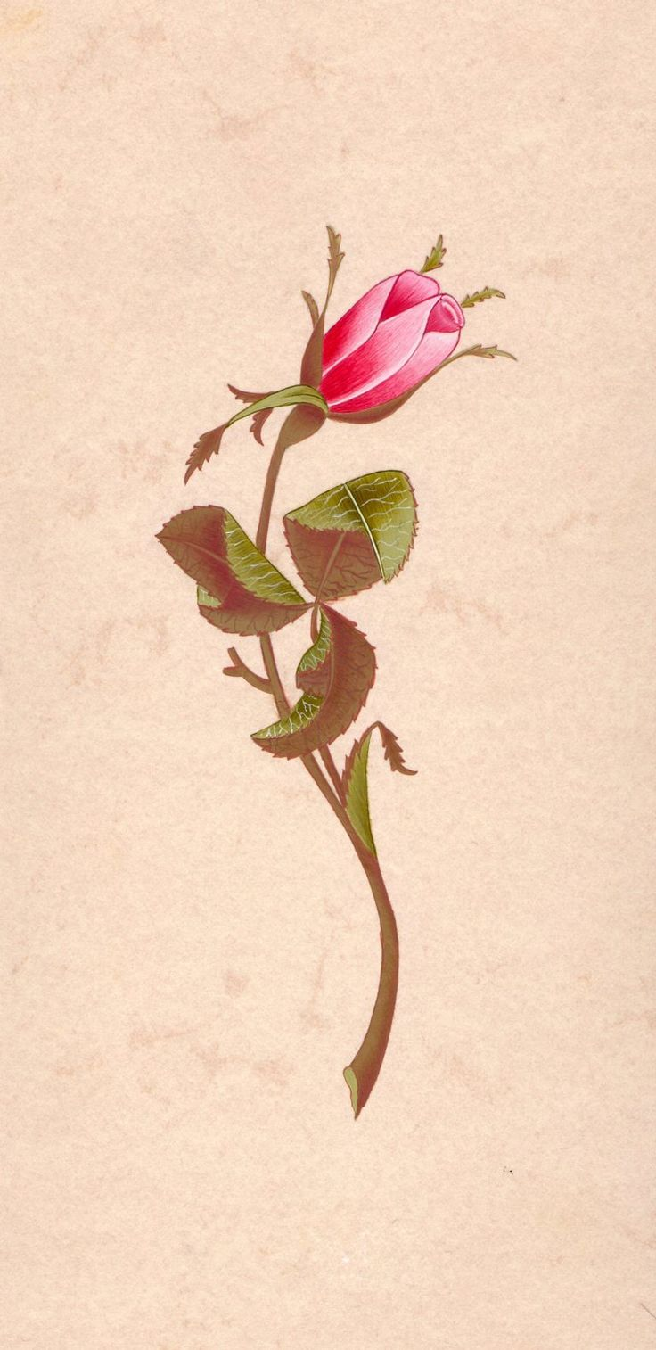Rosa by zynpklc.deviantart.com on @deviantART