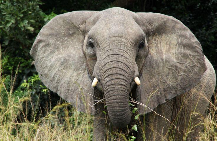 Vodní safari Nil, slon