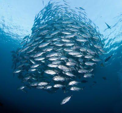 Éstas son las razones por las que no deberías comer peces - EligeVeg.com