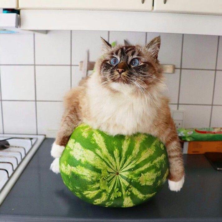 рыба демотиватор кот и арбуз качестве