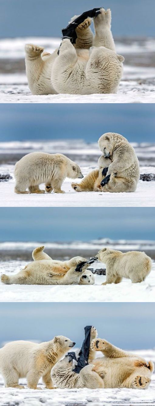 Almost in...let me try...they're mine! | Hilarious pictures of polar beating the chill as she tries on a pair of trousers.