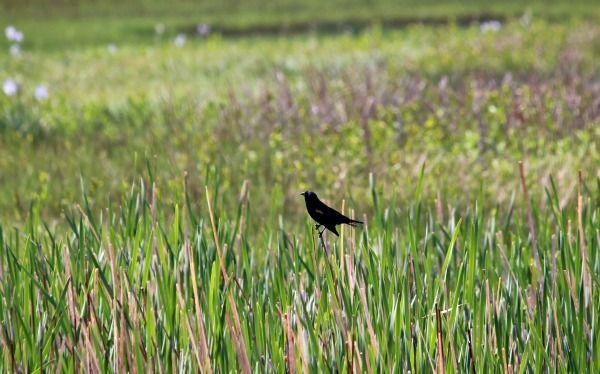 USA Roadtrip – Alamosa National Wildlife Refuge  More info: http://teatimeinwonderland.co.uk/lang/en/2014/06/28/usa-roadtrip-alamosa-national-wildlife-refuge/