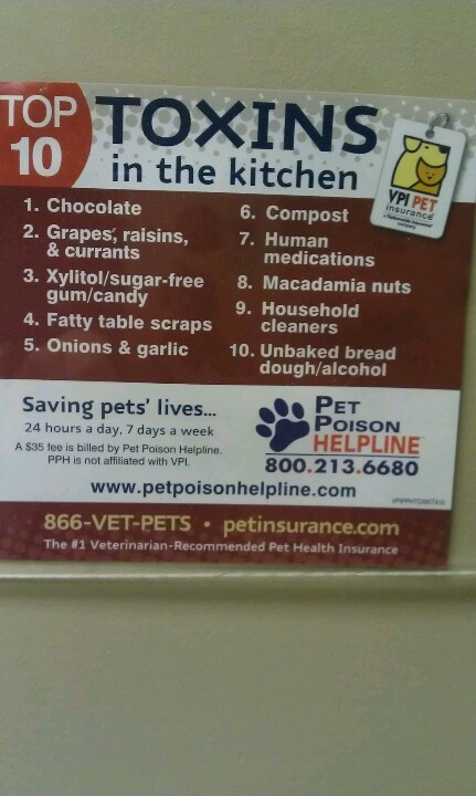 Pet poison hotline: Toxins in the Kitchen