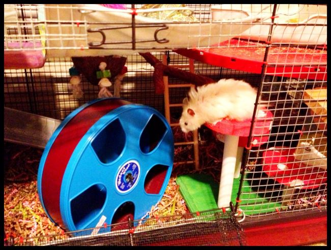 Hamsters & Gerbils