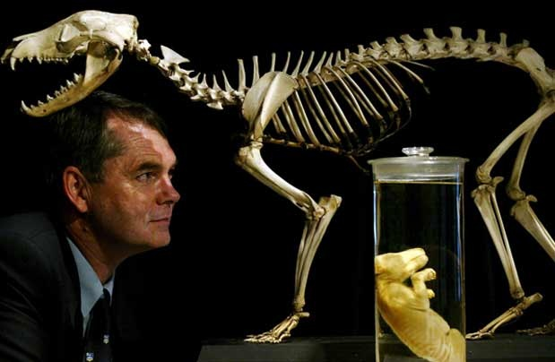 """Meet the extraordinary paleontologist most known for his involvement in the Riversleigh fossil site in Queensland where over 40,000 specimens of 300 species were derived, Mike Archer. He is also the lead Scientist of Lazarus Project that explores the possibility of bringing back the extinct gastric-brooding frogs. """"It's up to us to stop screwing up the world."""" Mike Archer http://www.thextraordinary.org/mike-archer"""