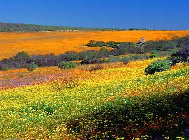 Flowers in the desert – Namaqualand, South Africa    Travel to Namaqualand between August and October and you can expect to see the    otherwise arid landscape transform into a bright carpet of blossoming spring    flowers. The spectacle does depend on weather conditions, but following the    winter rains, the dusty desert becomes a sea of colour and scent.    Explore the desert by 4x4, on the Namakwa route along Orange River to the    ocean. Kalahari Tours and Travel runs guided and…